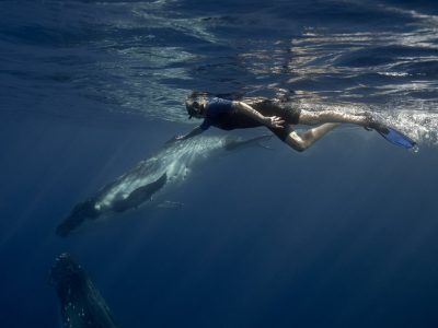 humpbackwhaleswim-tonga-scottwilsonimagery-freediving