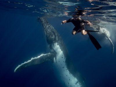 swimmingwithwhales-scottwilsonimagery-getdownfreediving-underwaterphotography