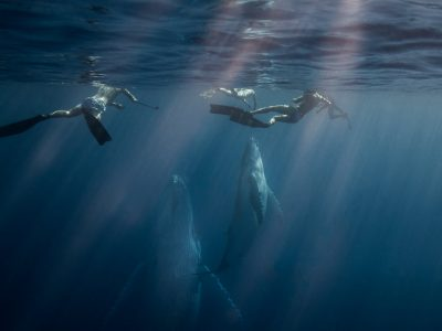 whaleswim-tonga-whales-freediving-scottwilsonimagery-underwaterphotraphy-