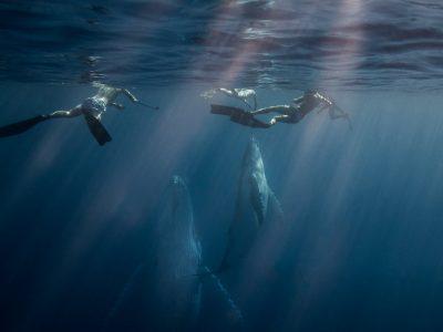whaleswim-tonga-whales-freediving-scottwilsonimagery-underwaterphotraphy-